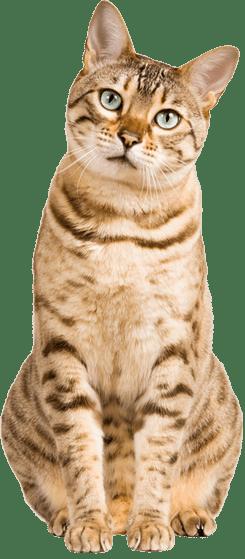 Tidy Cats cat